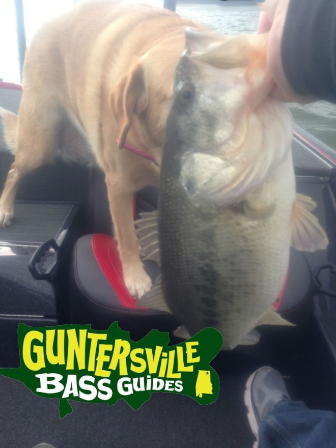Guntersville-Bass-Guides-Feb7-2016-02